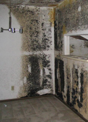 Mould remediation process to reduce health risks