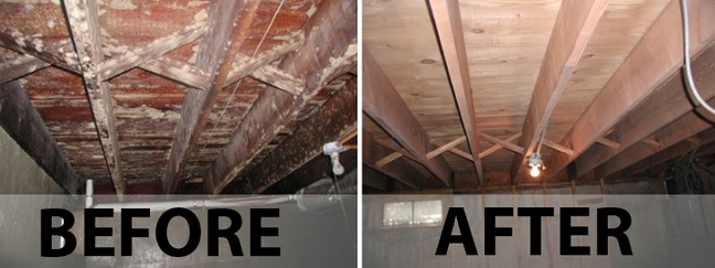 Mould Removal versus Mould Remediation