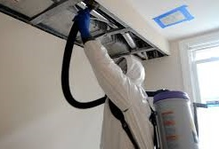 Air Purifying Mold Removal Services