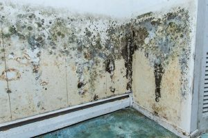 mould-removal-toronto