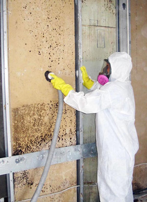 Mould Remediation Toronto